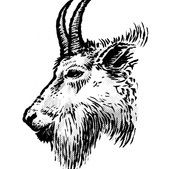 Mountain goat illustration prn1zi
