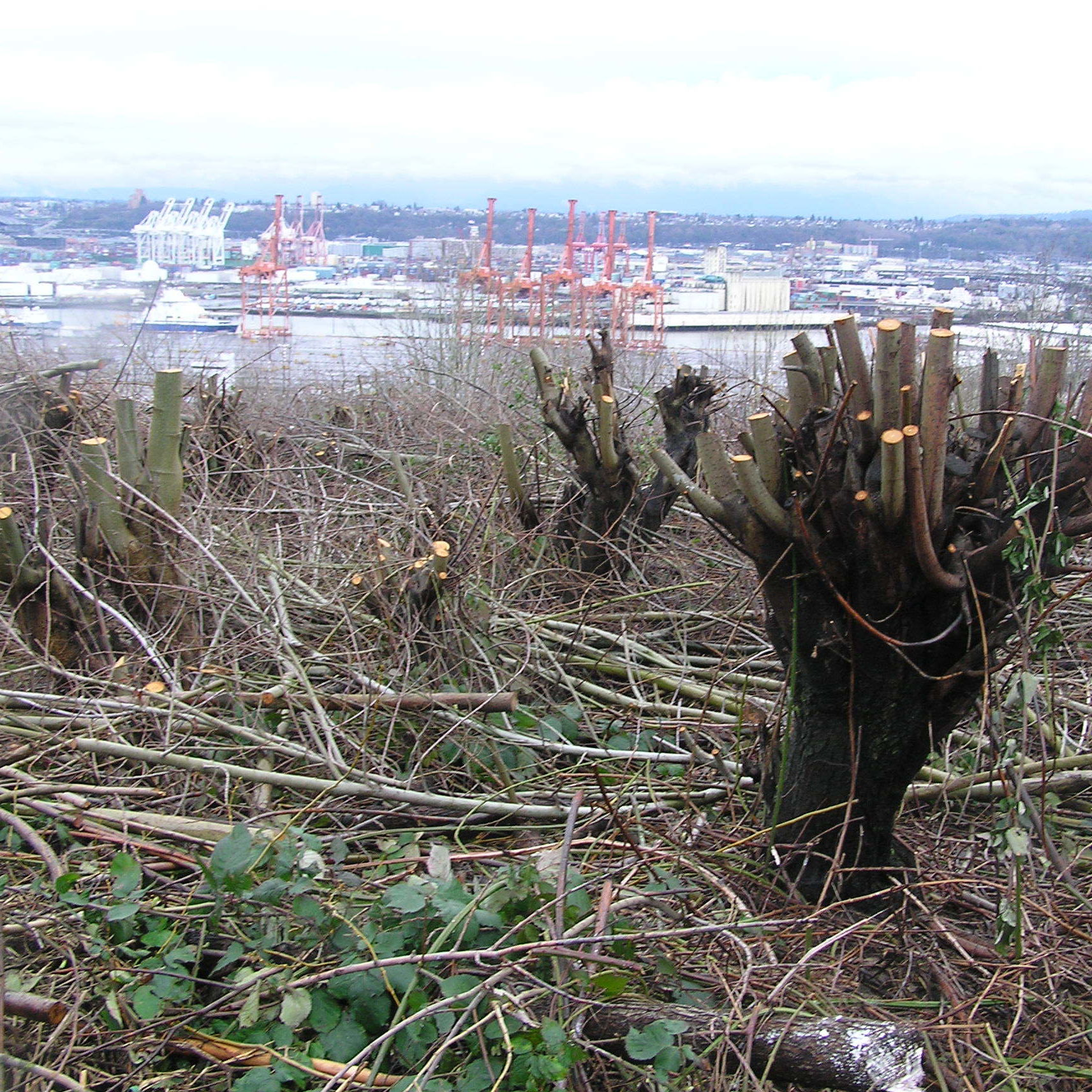 West seattle trees cut city lawsuit courtesy attorney wbrxro