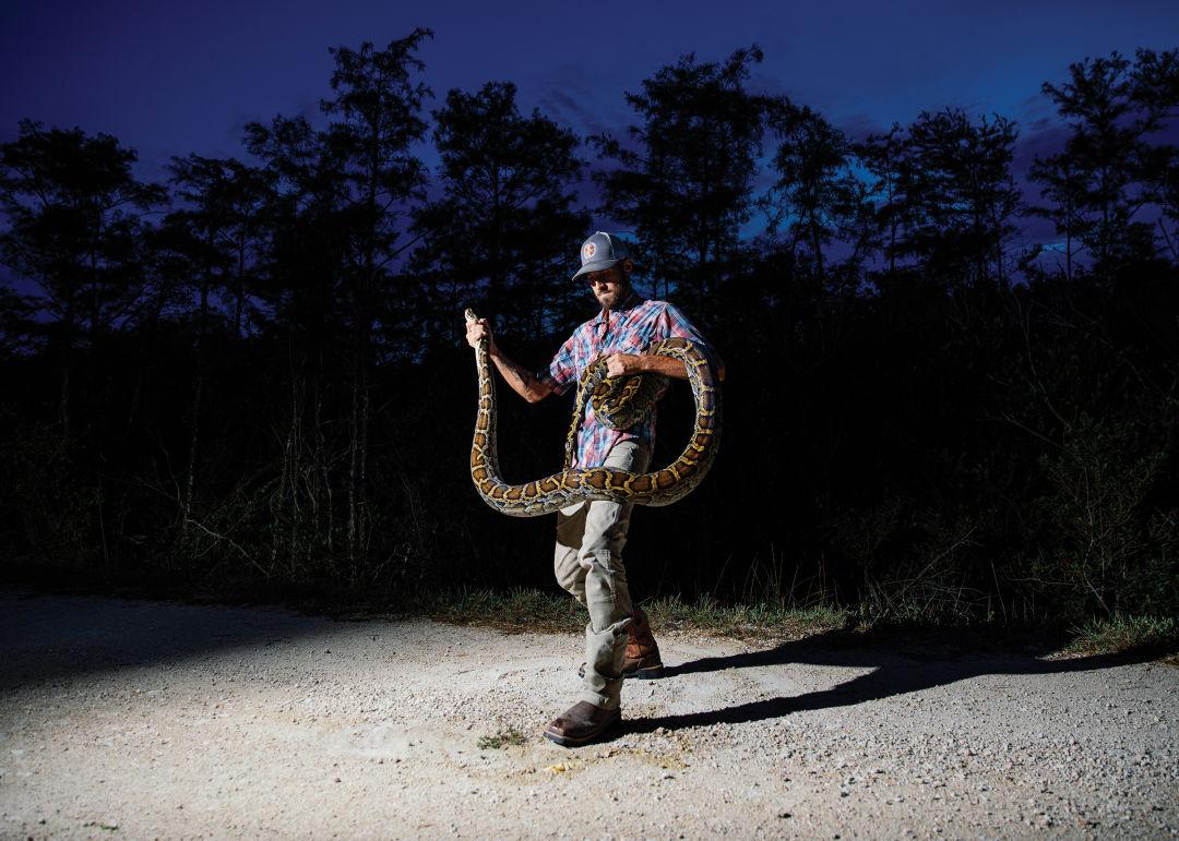 Tens of thousands of Burmese pythons inhabit the Everglades.