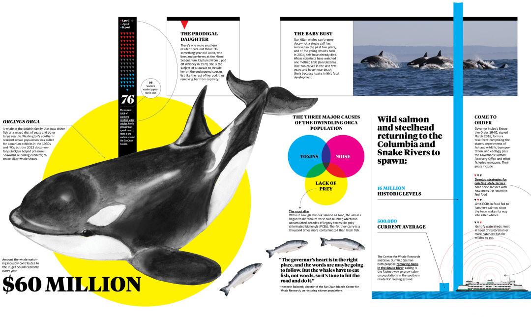 Orcas nczjwy