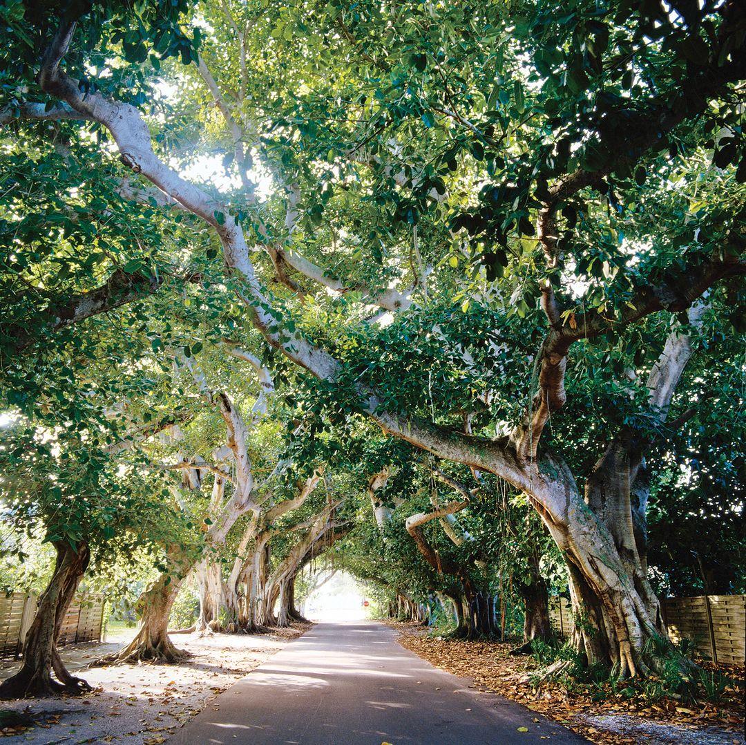 Boca grande banyon trees slvvoam2btuo6ttdo1qdtwp cmyk l xyg6p2