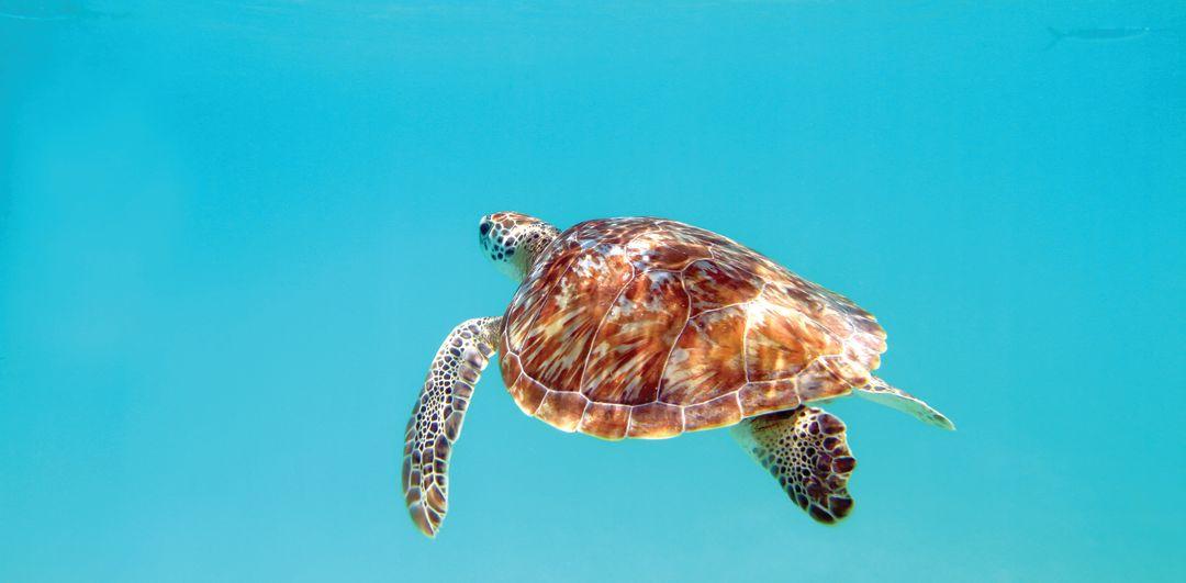 Shutterstock 186050852 loggerhead cmyk zceop4