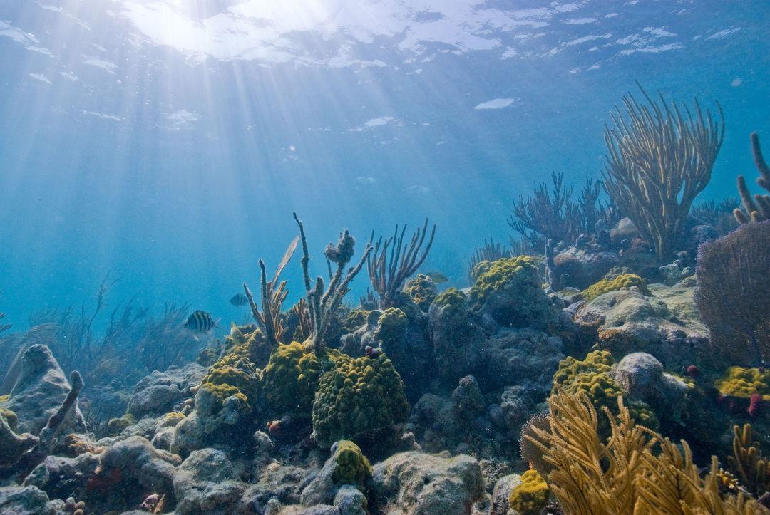 Biscayne underwater nps1 kewqtw