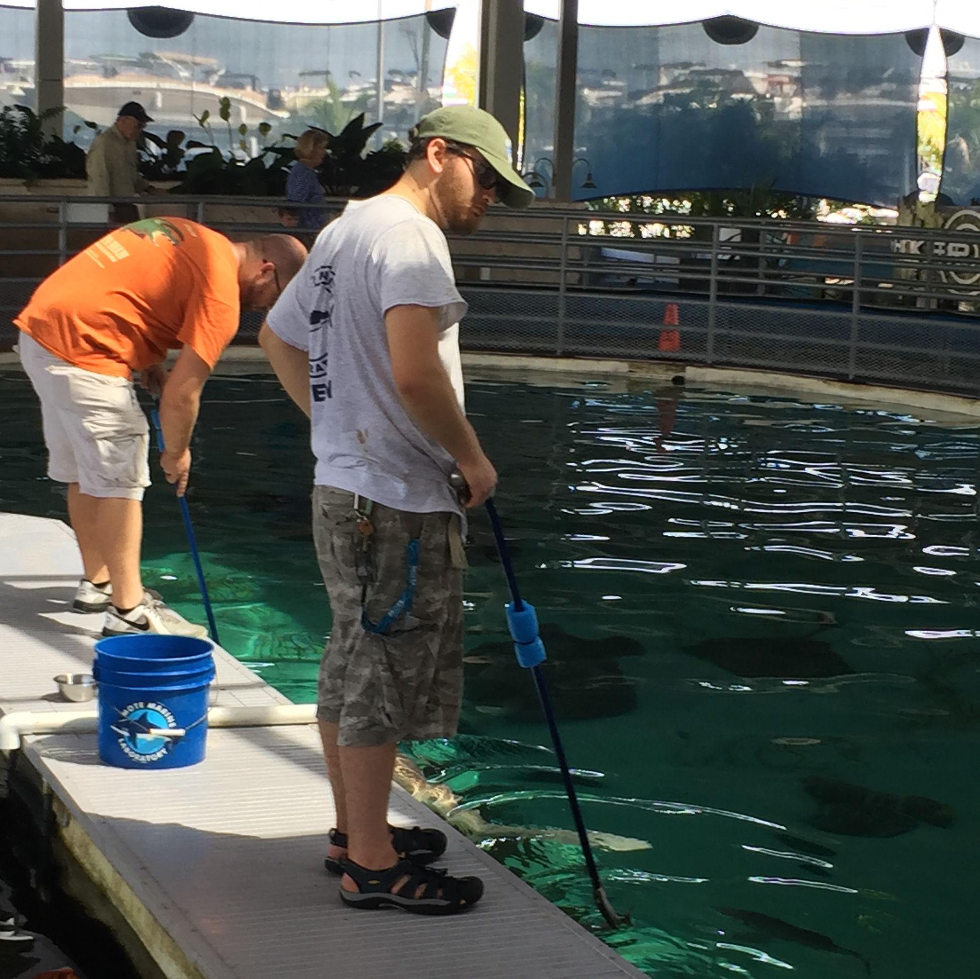 Feeding sharks usd24k
