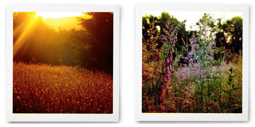 0318 field notes hogan butte collage hiraig