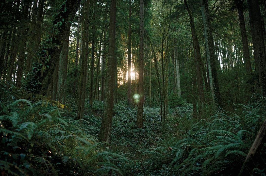 Pomo 0617 forest park 1 st8den