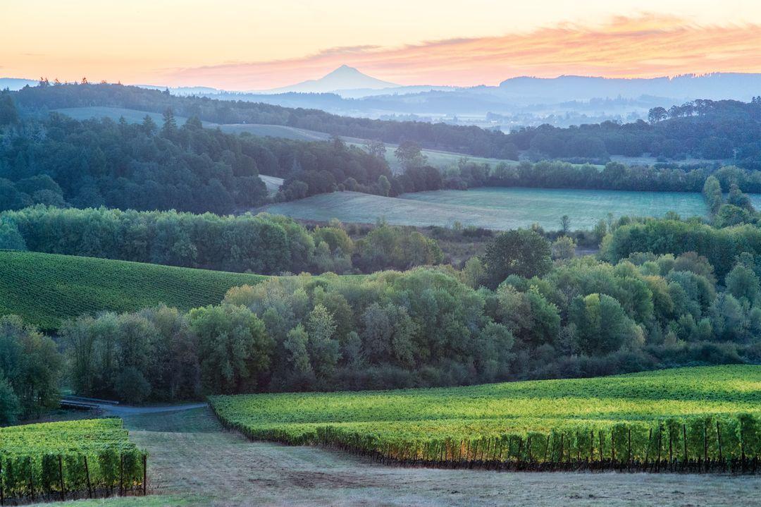 Gran moraine vineyard carolynwellskramerphotography uqb7p5