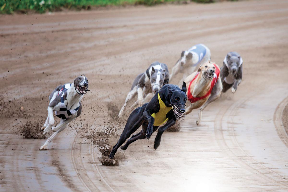 Racing Gift Dirt Track Racing Shirt Dirt Tracks All I Need is Dogs