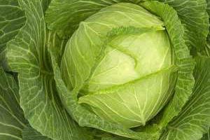 Cabbage e2y1ai