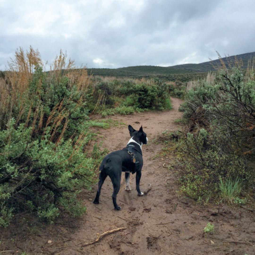 Pcsu 16 round valley dog pery73