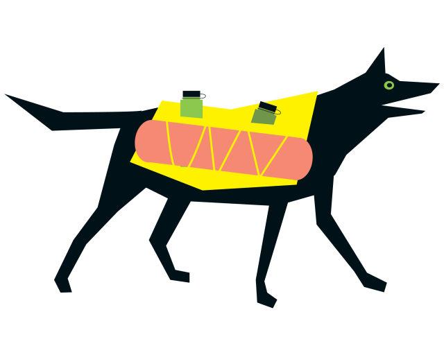 Pomo 0616 camping dog ckifpw