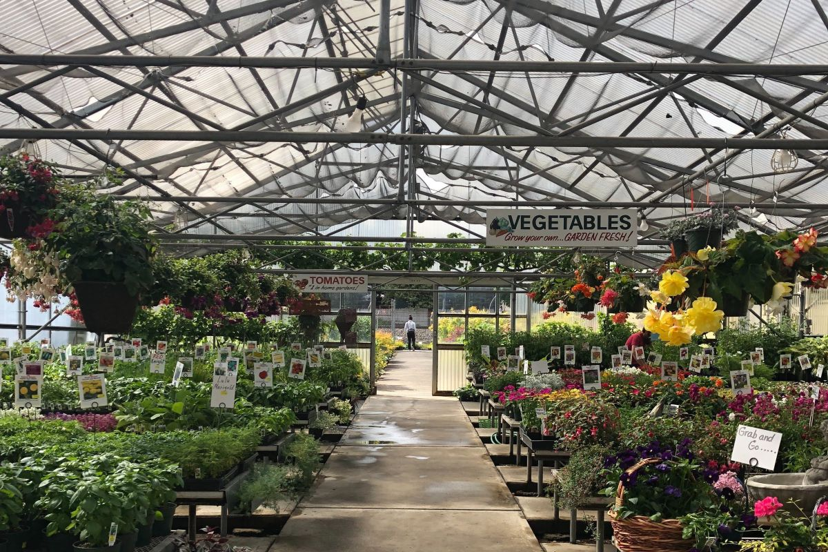 Cheap Auto Body Shop >> Faced with Peak Season Pressure, Portland's Nursery Industry Adapts to COVID-19 | Portland Monthly