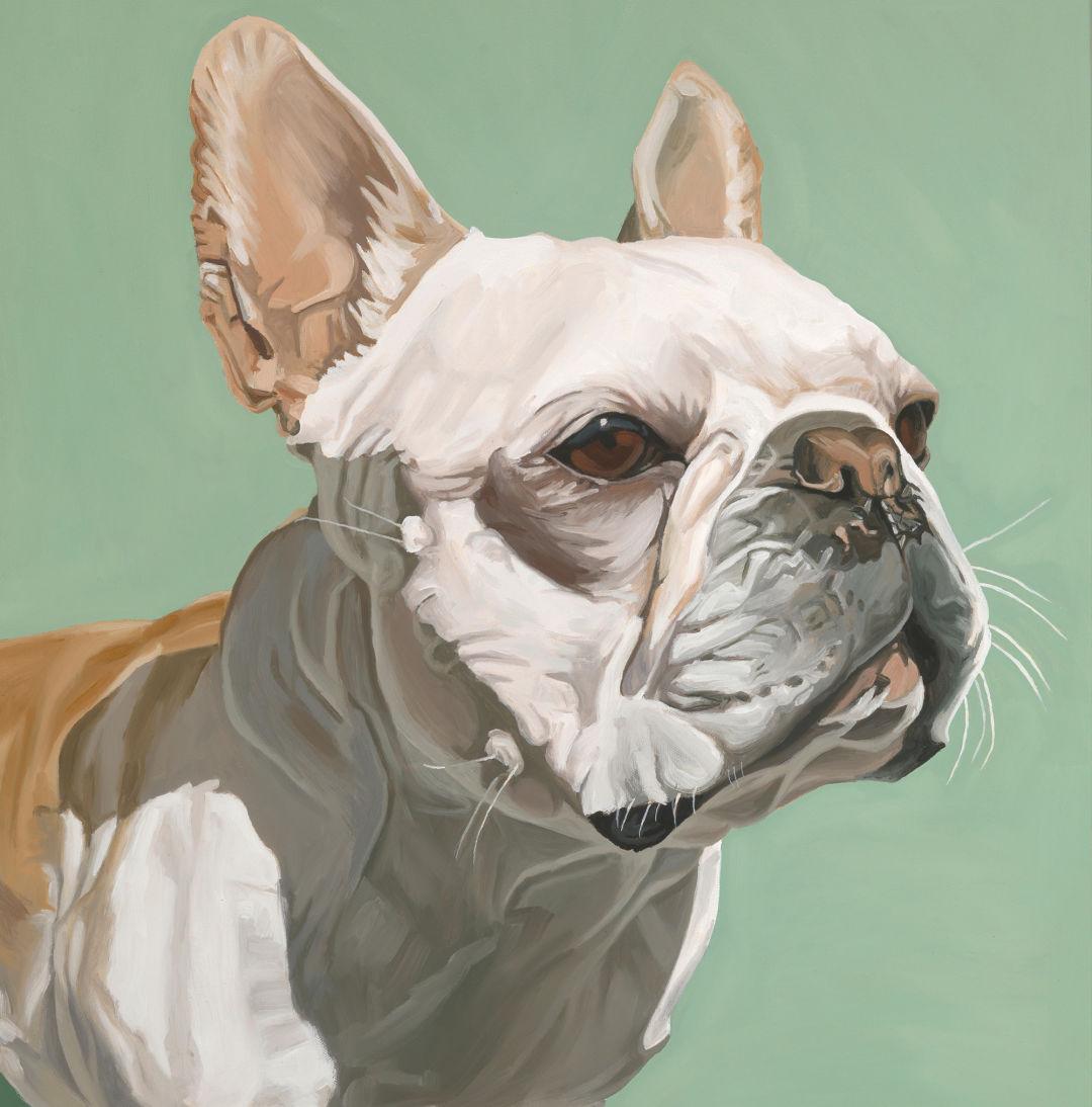 Pomo 0217 pets gear nathan rhodes pet portrait bulldog ilprn4