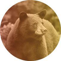 Pomo 0916 hunting bear 205 zqqs28