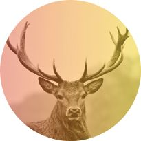 Pomo 0916 hunting deer 205 ipzmn2
