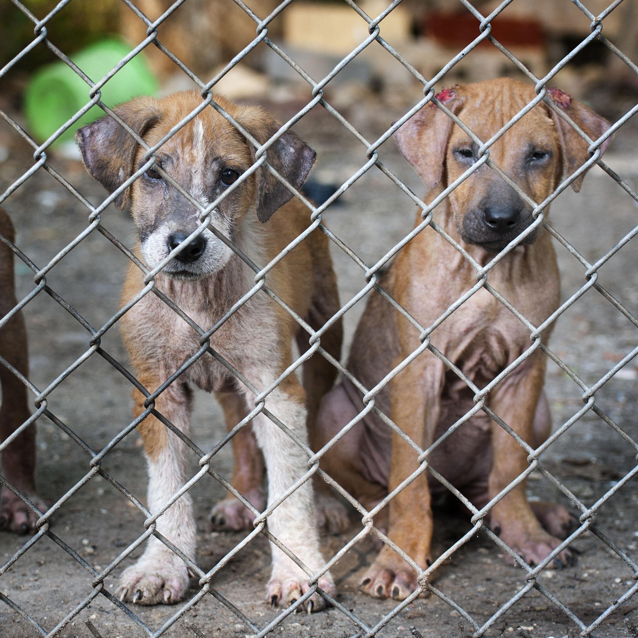 Glens puppies3 fueak7