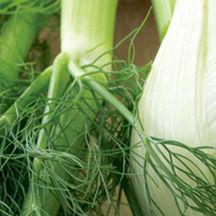 0707 pg159 savor fennel t jlzqt8