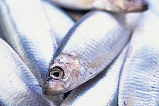 0706 pg151 savor fishy t pwnnyx