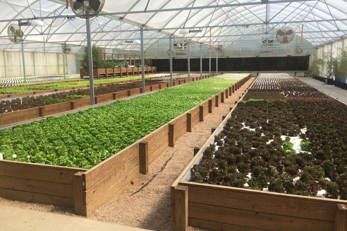 A Seed-to-Plate Wonderland is Hidden in Hockley | Houstonia