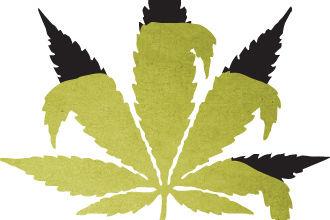 Cosu summer 15 jerry olson pot leaf vg1irm