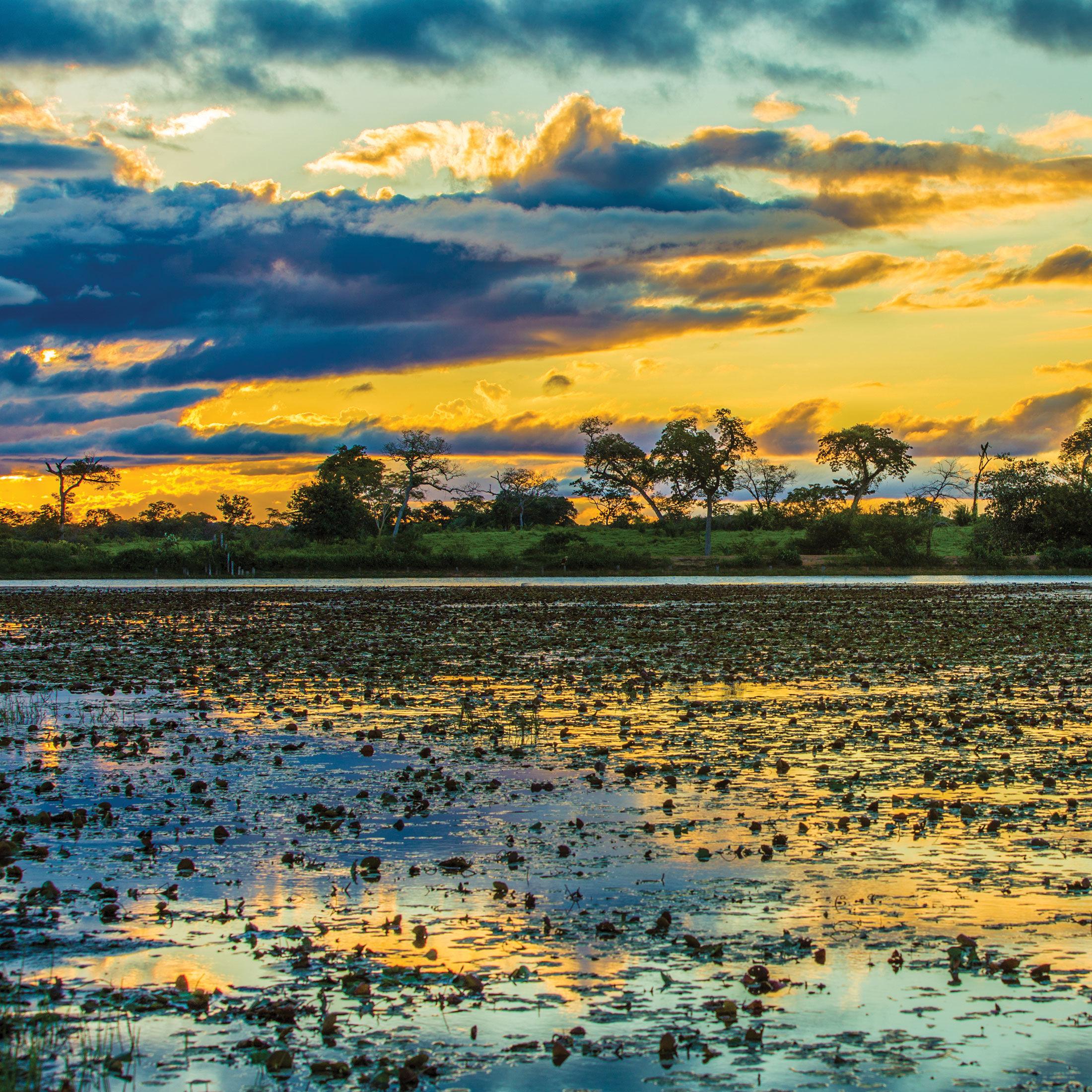 Everglades sunset qe8fpa