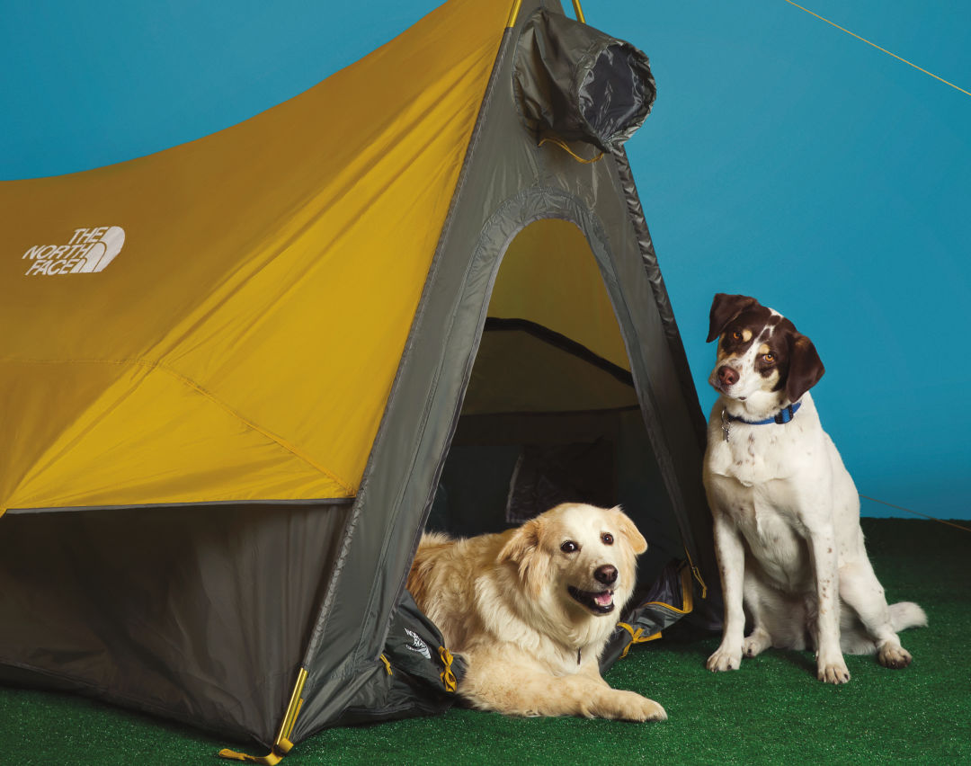 Asso 0716 time travel dawgs tent v4daa3