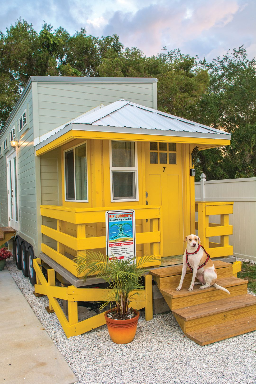 Tinyhouse yellowlifeguardwdog qhuzwz