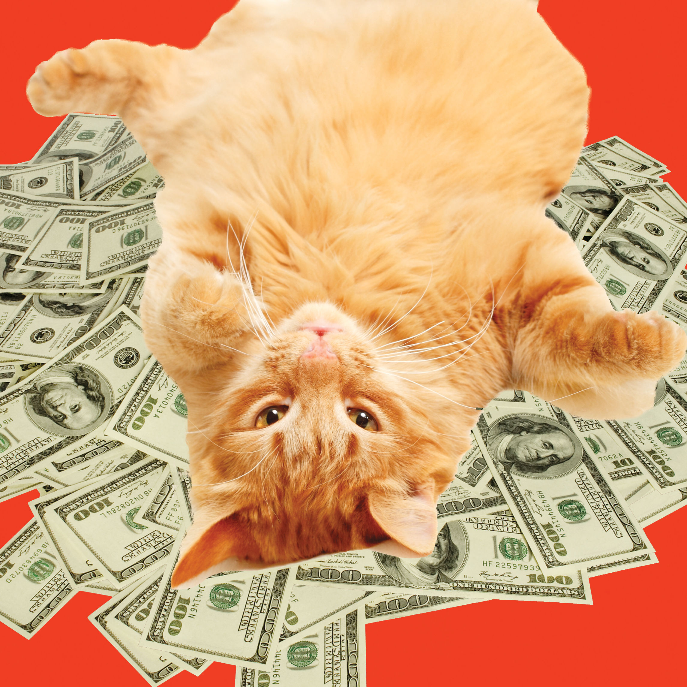 0518 finance cat money kya8zf