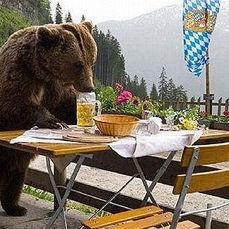 Bear zta4nc