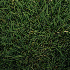 073 fiction grass at my feet t lnqi6a