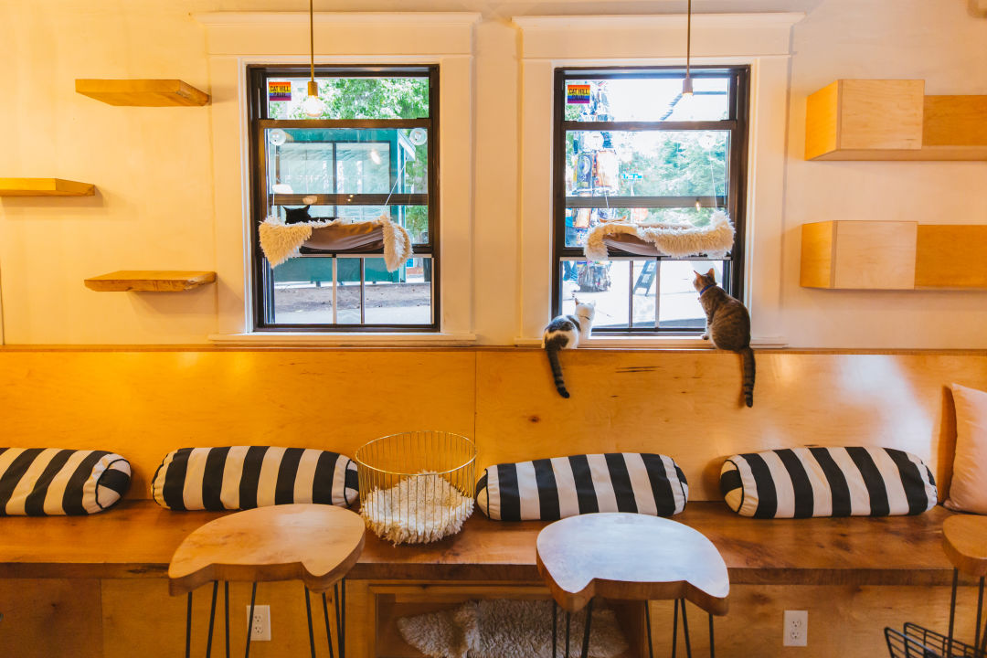 A Guide To Seattle S Cat Cafe Scene Seattle Met