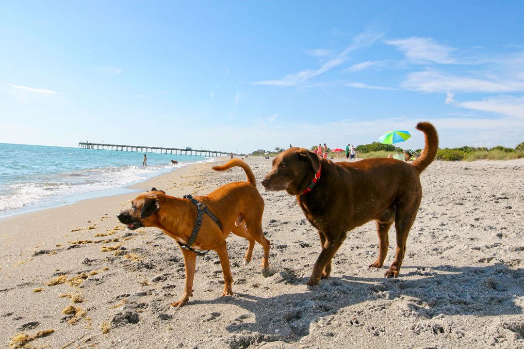 Dog beach   11  assfta