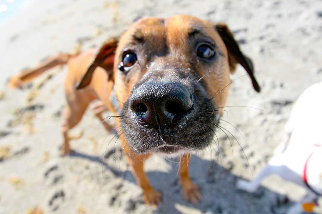 Sorry, four-legged friends: no dogs on the beach.
