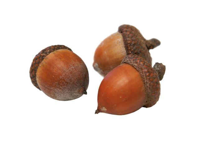 Pcwi 14 weather acorns dbqbm8