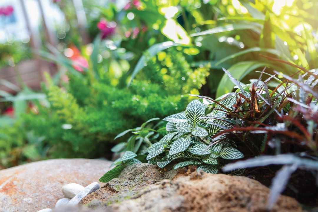 Bye Bye Lawn Four Great Alternatives To Grass Landscaping