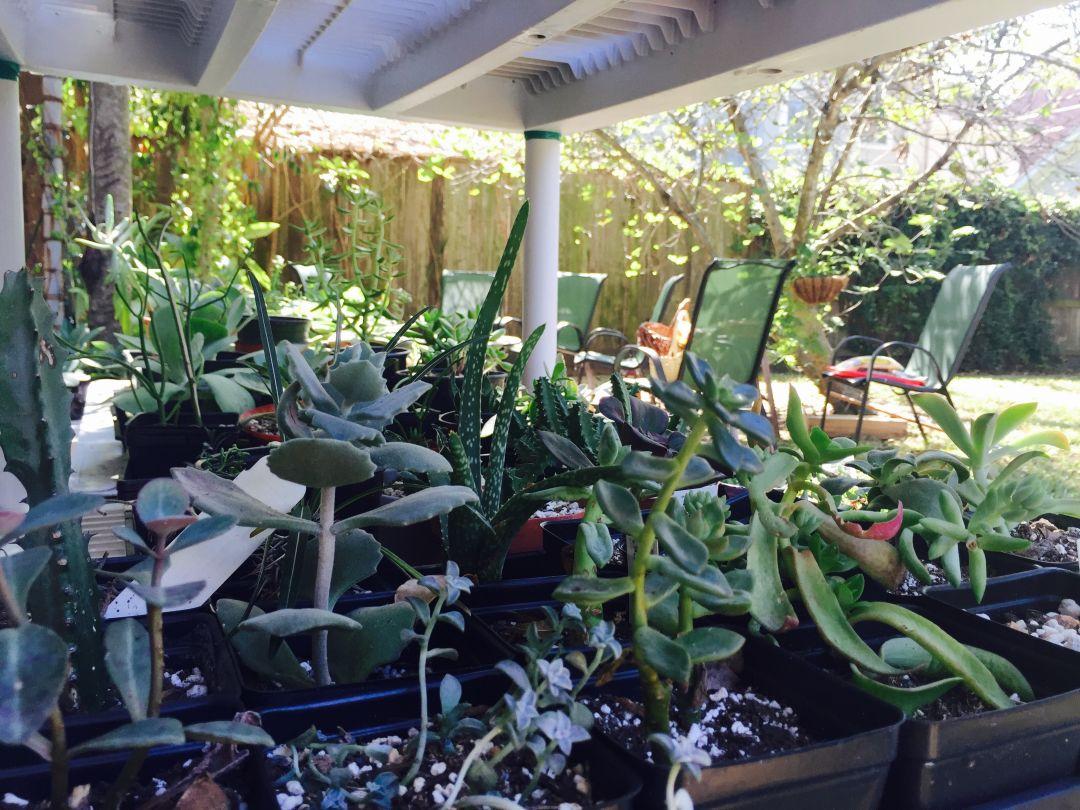 A Plant Lesson From Andrea Afra Houston S Succulent Whisperer Houstonia Magazine