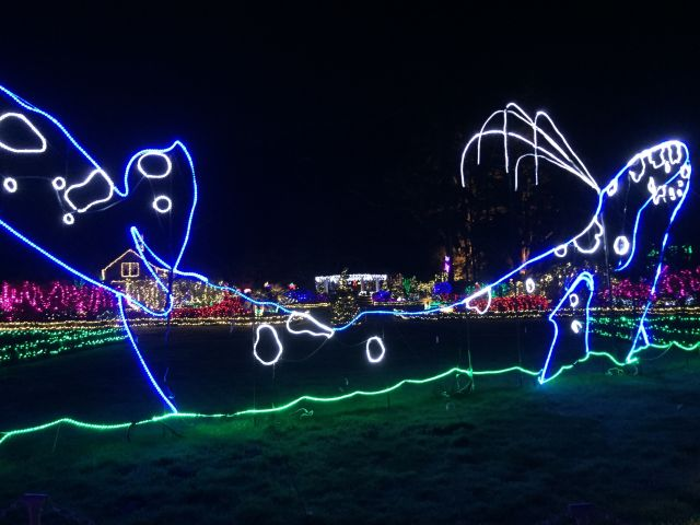 A whale in lights at Shore Acres State Park in 2018