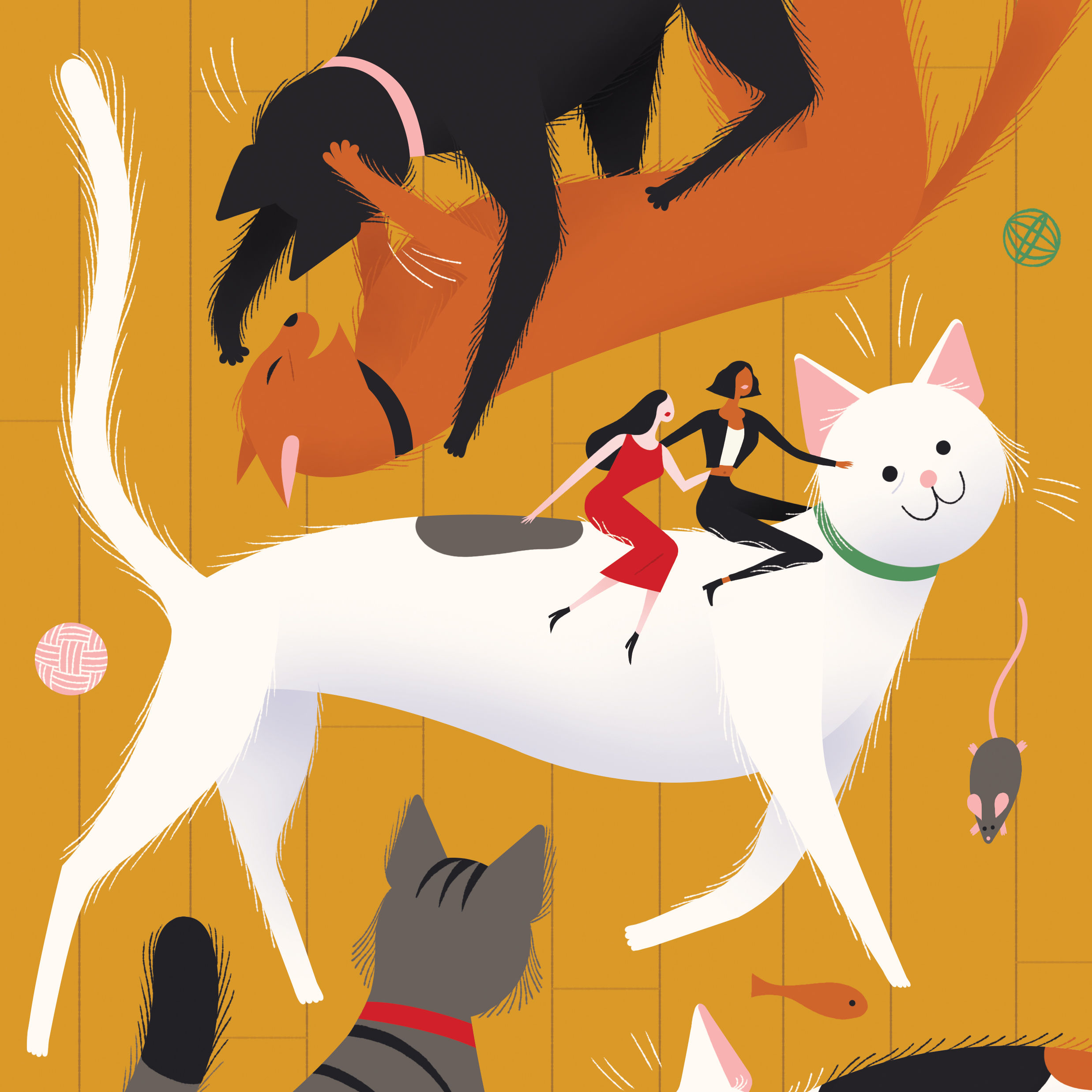 Pomo 0217 pets opener cat illustration xxuriw