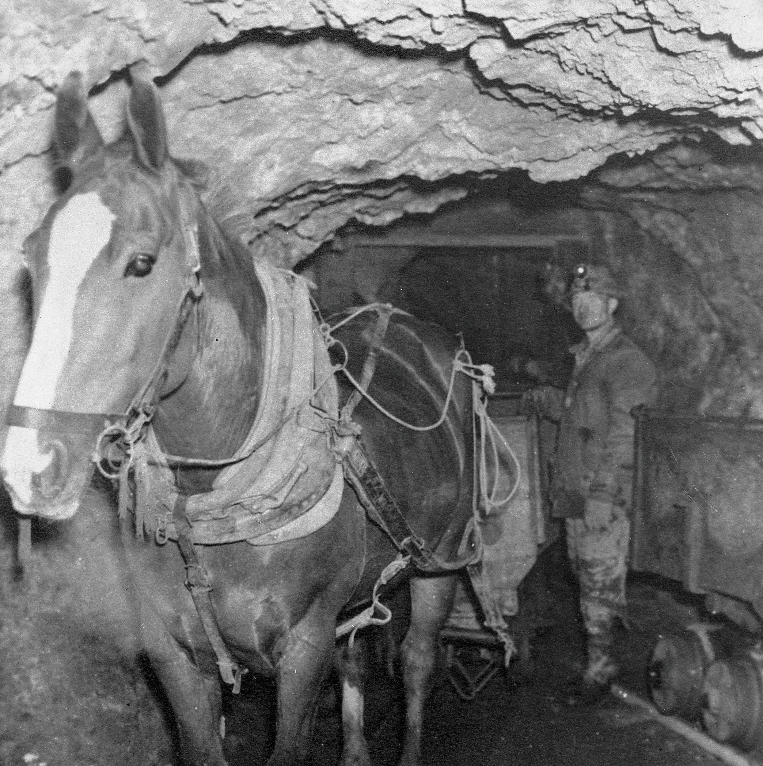 Park city summer 2012 horses mining c67xhb