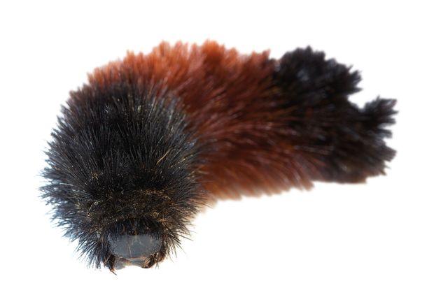 Pcwi 14 weather caterpillar u7auof