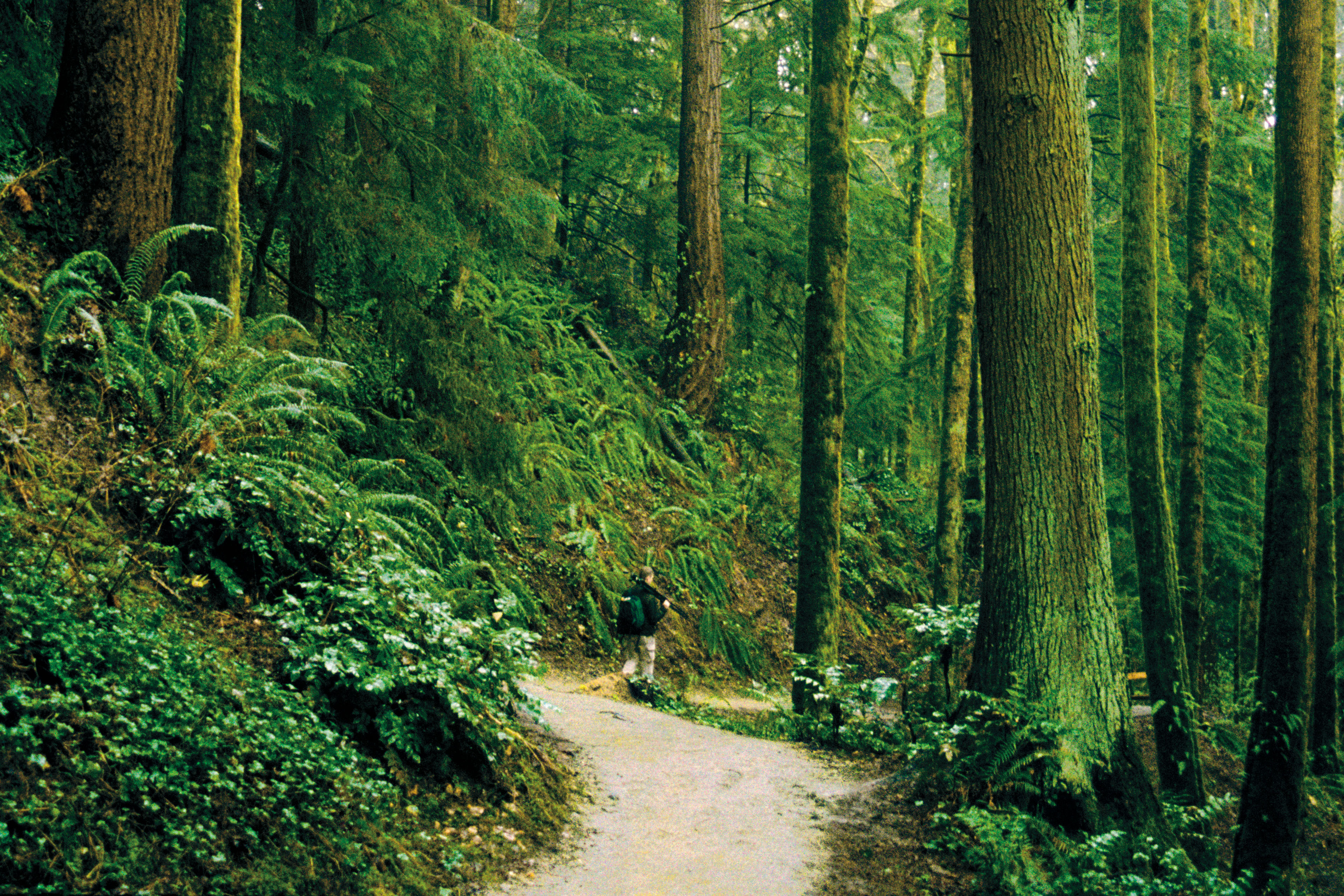 Forest Park Guide The Best Runs Portland Monthly