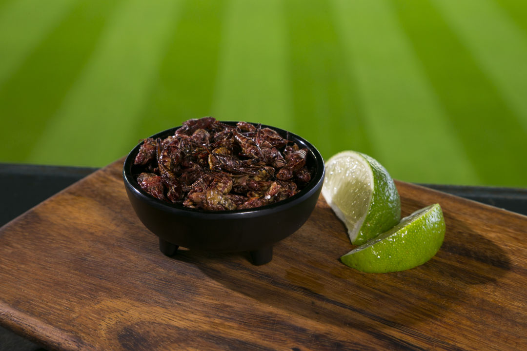 Poquitos oaxacan chapulines nyhjfl