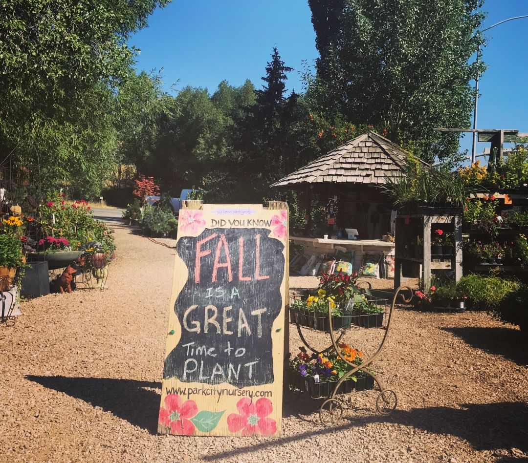 Nurture Blooms Until The Flurries Fly Park City Magazine