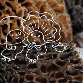 Mushroomfeast caroletopalian stefchoi 540 rgm9re