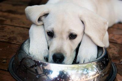 Dog1 tuccra