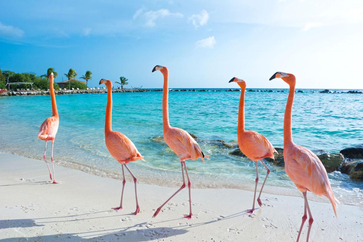 Gone to the Beach Flamingo