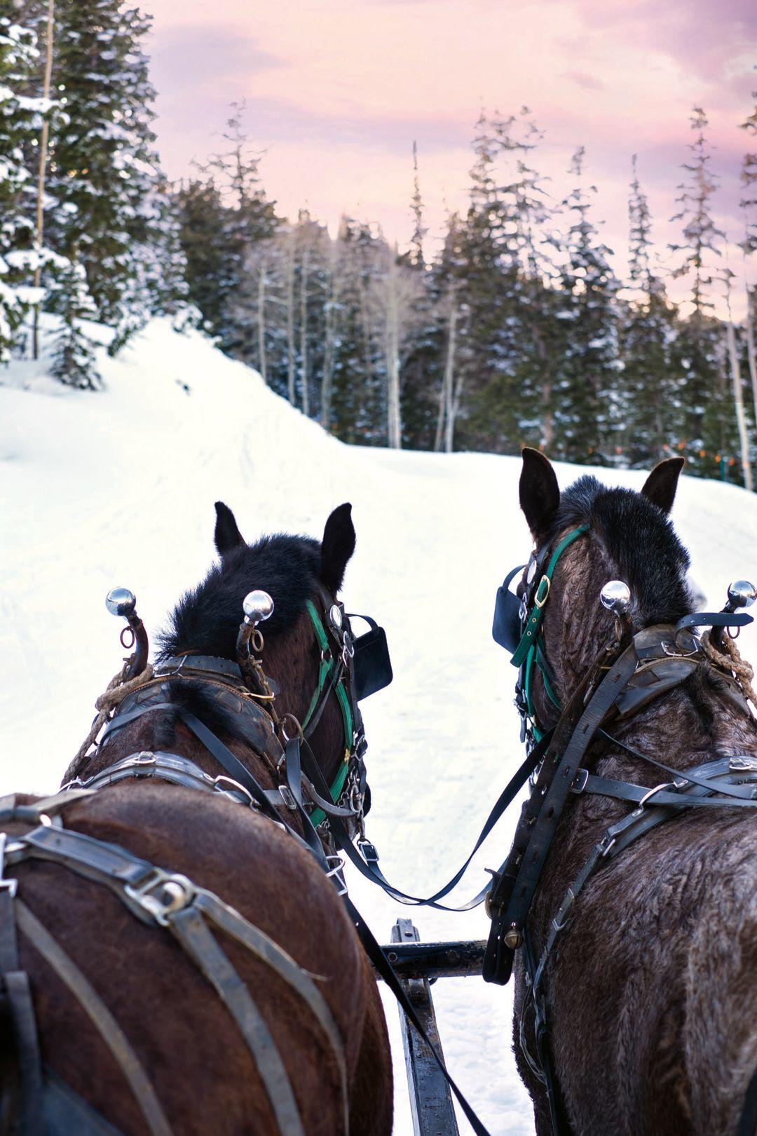 Horses sleigh 2 f4607 cmyk zv170i