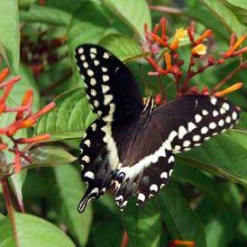 Butterflygardensarasotamag gbntxe