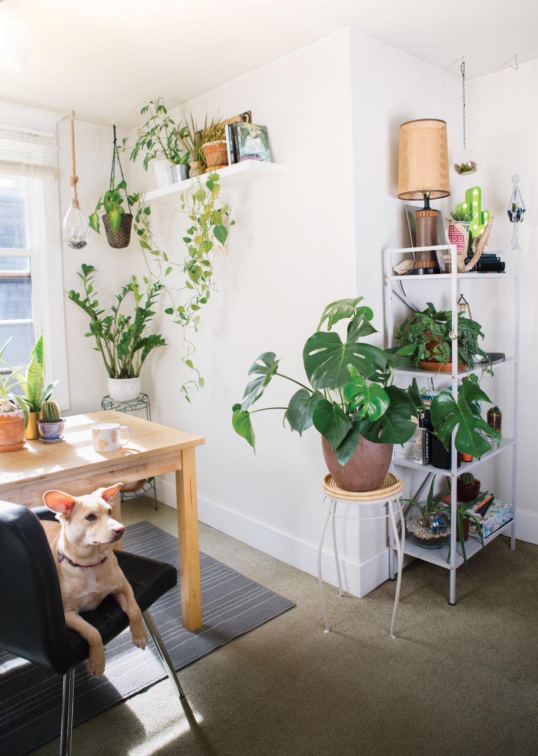How to Keep Indoor Plants | Seattle Met