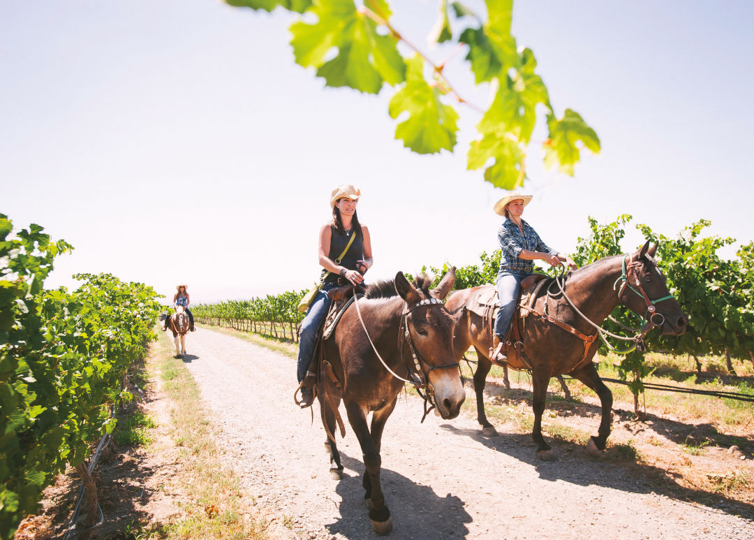1017 wine country escapes yakima horses flnca5